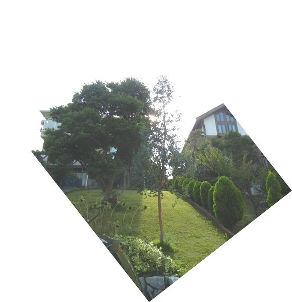 2011年7月24日(日)夏の木は伸び放題!_f0060461_1648487.jpg