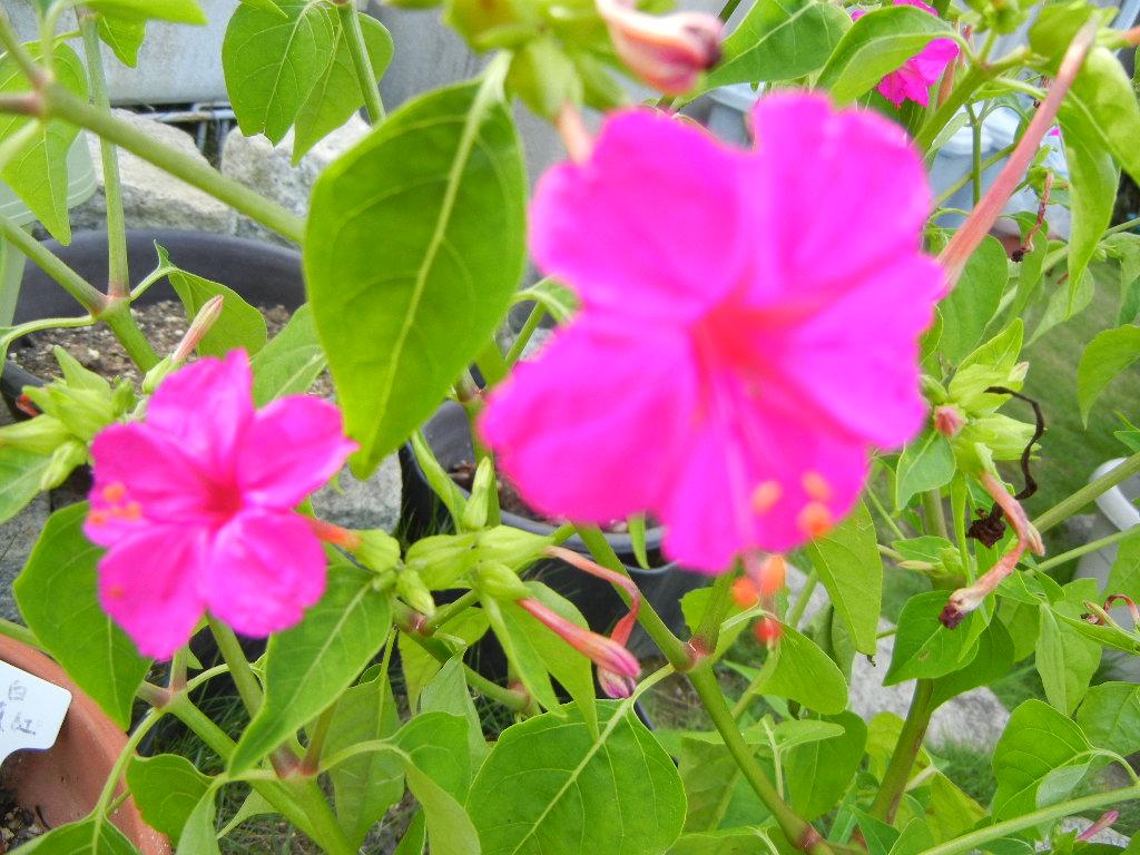 2011年7月24日(日)夏の木は伸び放題!_f0060461_16512946.jpg