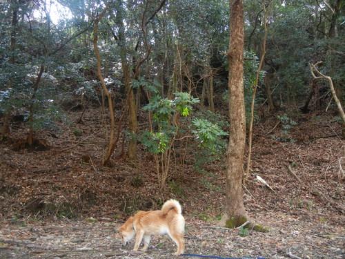 2011年7月24日(日)夏の木は伸び放題!_f0060461_1656490.jpg