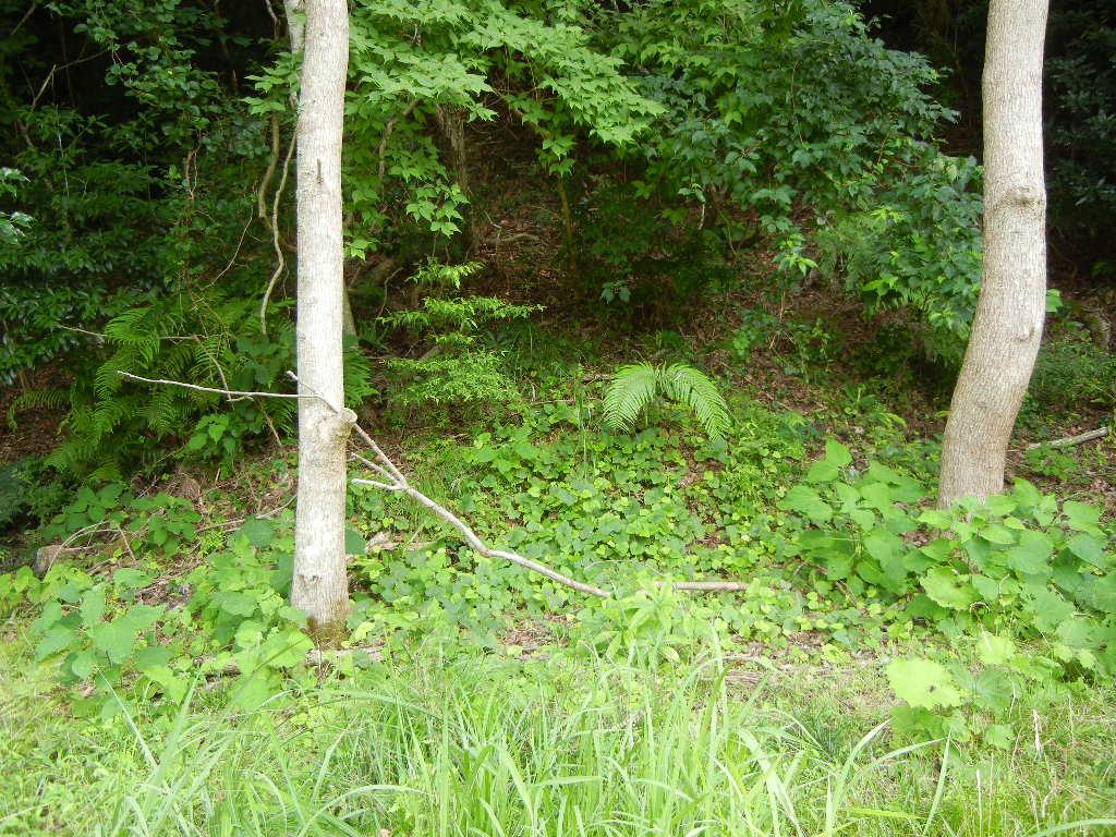 2011年7月24日(日)夏の木は伸び放題!_f0060461_16582435.jpg