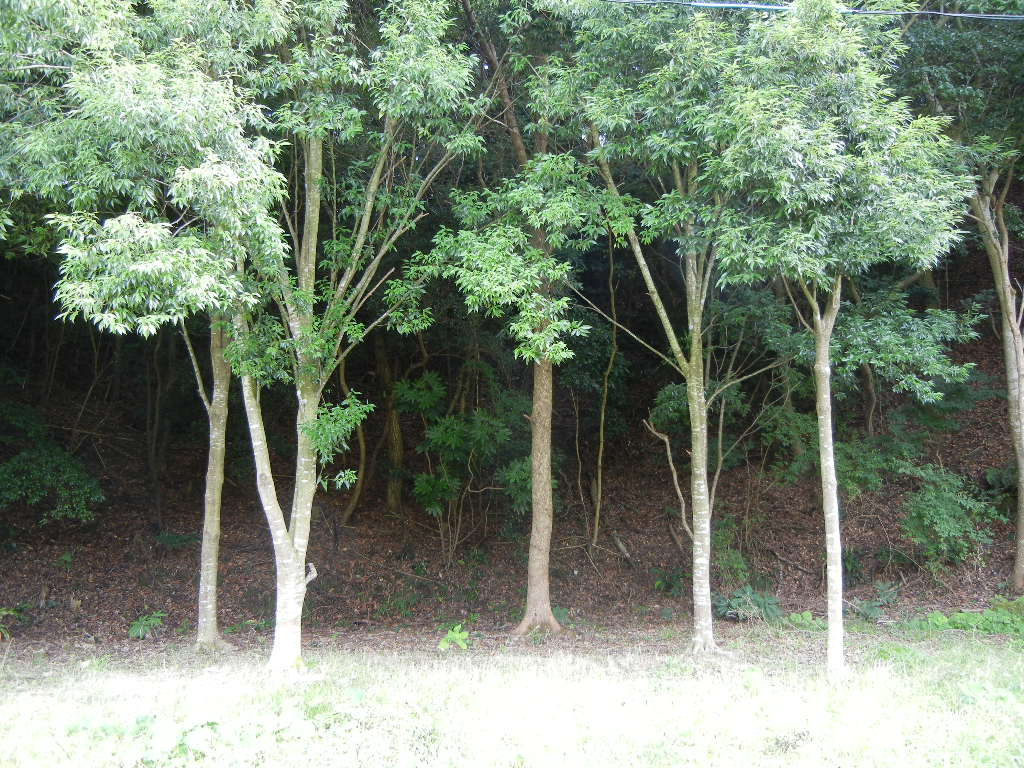 2011年7月24日(日)夏の木は伸び放題!_f0060461_1829186.jpg