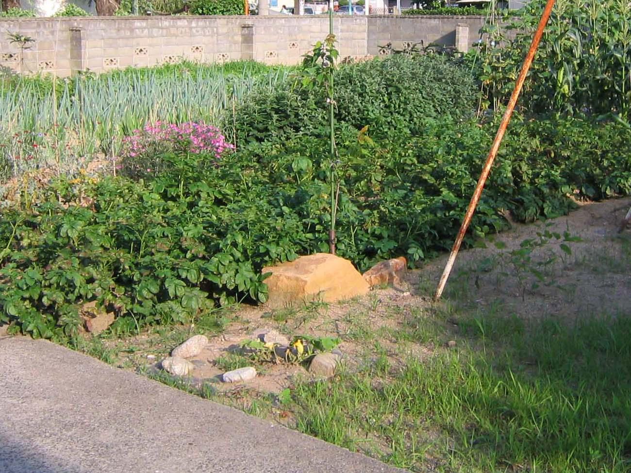 少し昔の福島の実家の庭の写真_c0166765_2473131.jpg