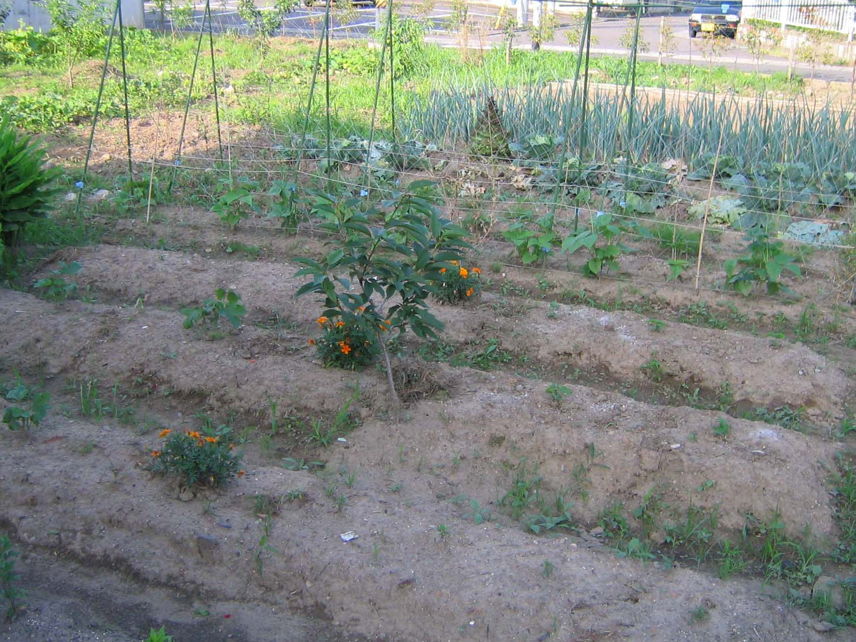少し昔の福島の実家の庭の写真_c0166765_252319.jpg