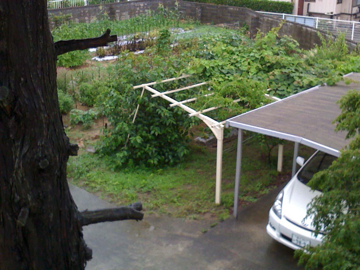 少し昔の福島の実家の庭の写真_c0166765_313897.jpg