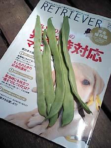 夏ですね〜_b0084194_1541415.jpg
