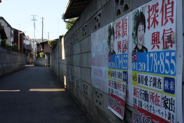 矢切  野菊のマルフク_b0061717_11441624.jpg