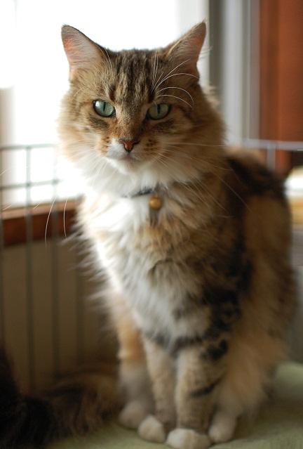 トナリのネコはウツクシイ_f0085219_9363734.jpg