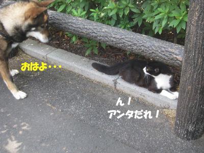 f0143123_20142945.jpg