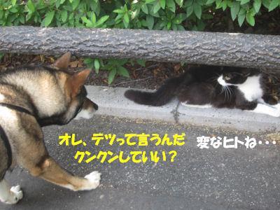 f0143123_20144717.jpg