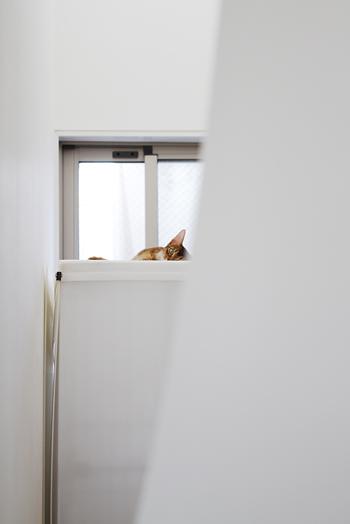 [猫的]海抜_e0090124_6442132.jpg