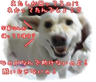 f0195543_21212877.jpg
