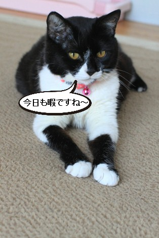 20日目のちびにゃんと猫の母性って_e0151545_2212389.jpg