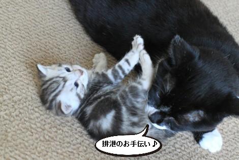 20日目のちびにゃんと猫の母性って_e0151545_22145027.jpg