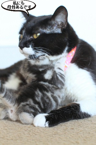 20日目のちびにゃんと猫の母性って_e0151545_22155549.jpg
