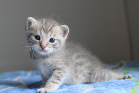 20日目のちびにゃんと猫の母性って_e0151545_22234594.jpg