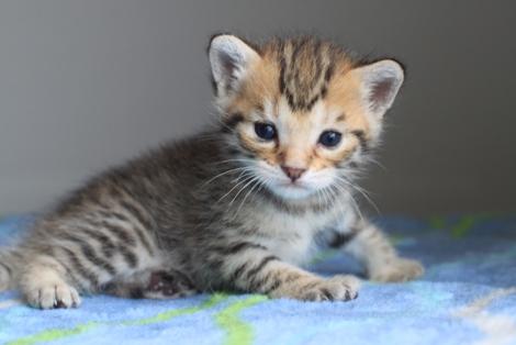 20日目のちびにゃんと猫の母性って_e0151545_2225416.jpg
