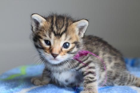 20日目のちびにゃんと猫の母性って_e0151545_2226143.jpg
