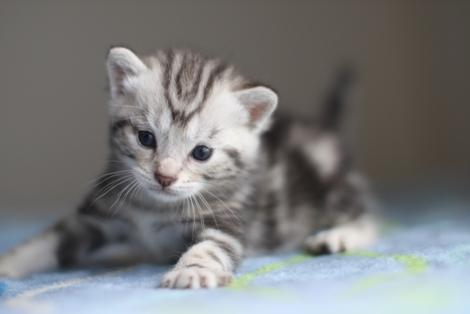 20日目のちびにゃんと猫の母性って_e0151545_22291736.jpg