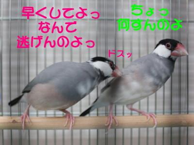b0158061_2195259.jpg