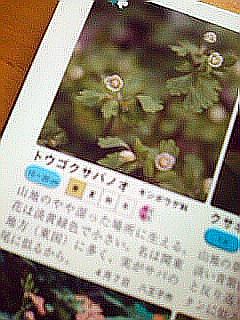 f0099367_9481973.jpg