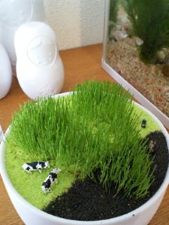 芝刈り_a0134394_64493.jpg