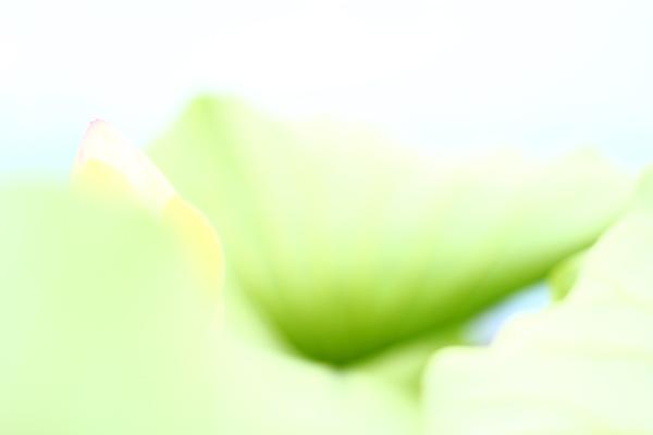 f0181018_239181.jpg