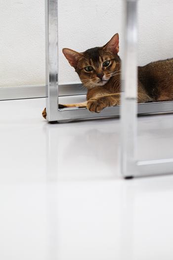 [猫的]金属_e0090124_6128.jpg