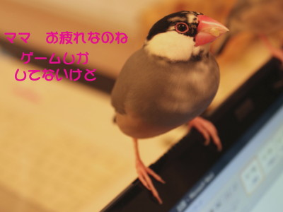 b0158061_21112857.jpg