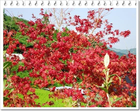 季節感のない我が家の庭!!_a0199979_1550877.jpg