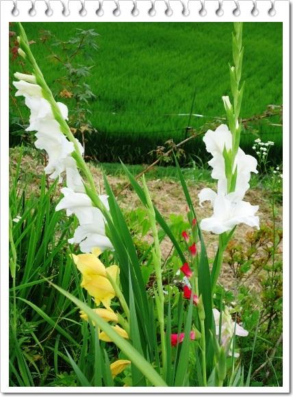 季節感のない我が家の庭!!_a0199979_15522259.jpg
