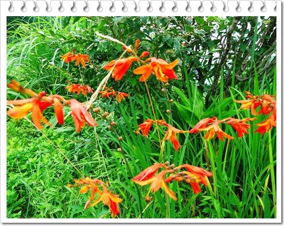 季節感のない我が家の庭!!_a0199979_15524580.jpg