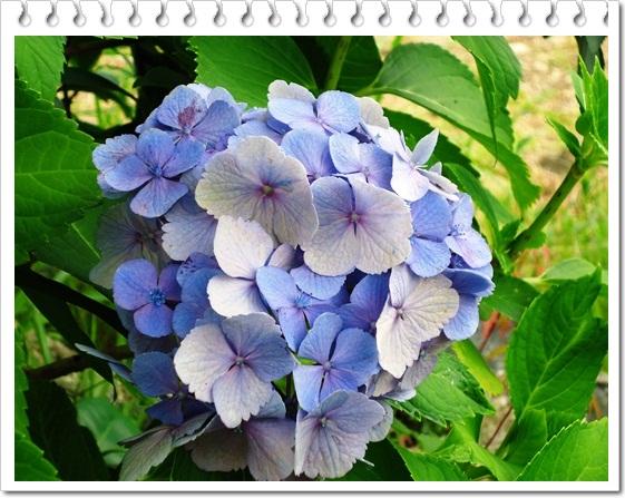 季節感のない我が家の庭!!_a0199979_1552779.jpg