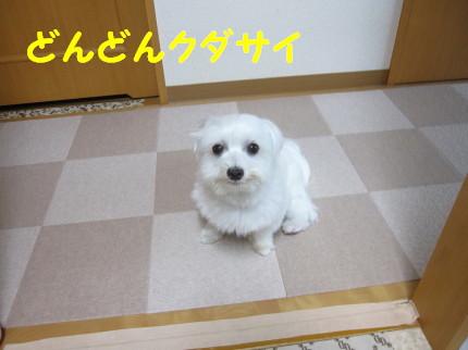 b0193480_20113265.jpg