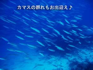 f0144385_2202756.jpg