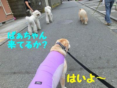 初♪ 三浦西瓜_e0222588_17361134.jpg