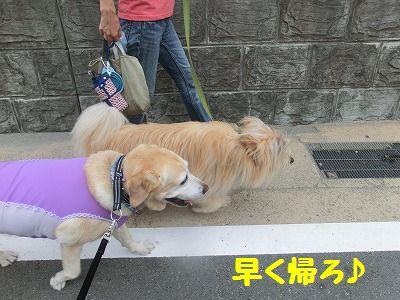 初♪ 三浦西瓜_e0222588_17383625.jpg