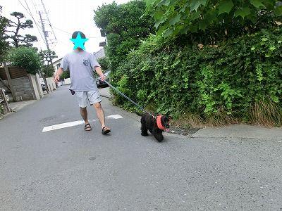 初♪ 三浦西瓜_e0222588_1739263.jpg