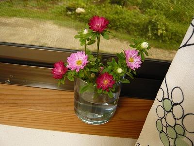 お花のチカラ_c0165589_805921.jpg