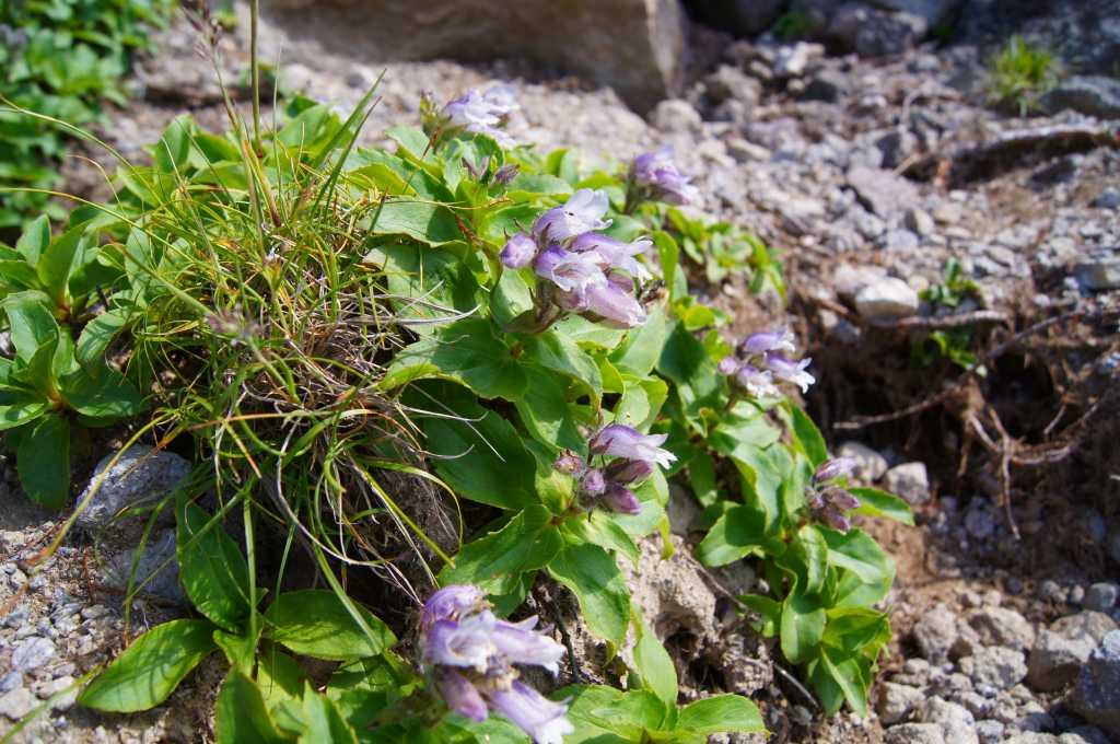 7月24日高原温泉から緑岳-その1-_f0138096_1482627.jpg