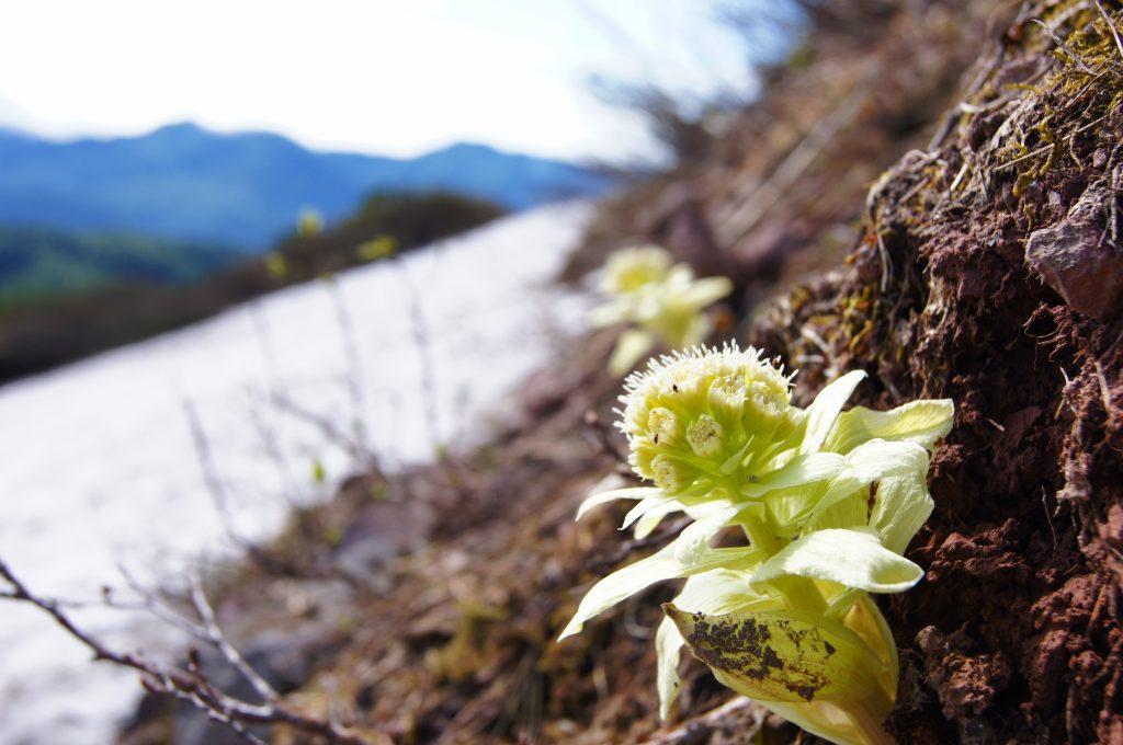 7月24日高原温泉から緑岳-その1-_f0138096_148913.jpg