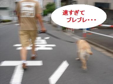 b0226221_160152.jpg