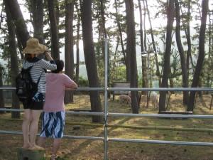 2011~粟島の巻~_e0062921_17103648.jpg