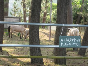 2011~粟島の巻~_e0062921_171119.jpg