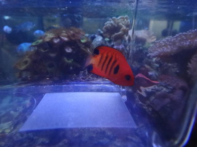 海水魚・サンゴ・水草・淡水魚_f0189122_1383970.jpg