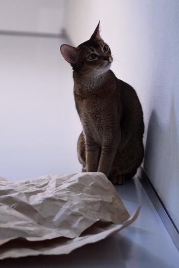 [猫的]ハトロン紙_e0090124_5551456.jpg