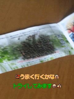 f0126151_2156153.jpg