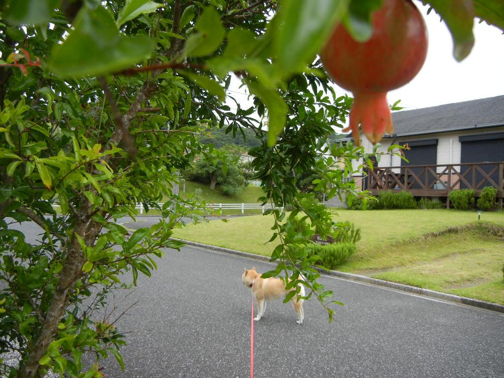 7月27日(水)今日は雨、で、涼しいです!_f0060461_10354678.jpg