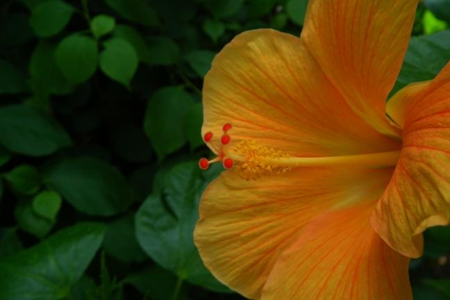 夏の植物園 2 クローズアップ_b0214473_8231738.jpg