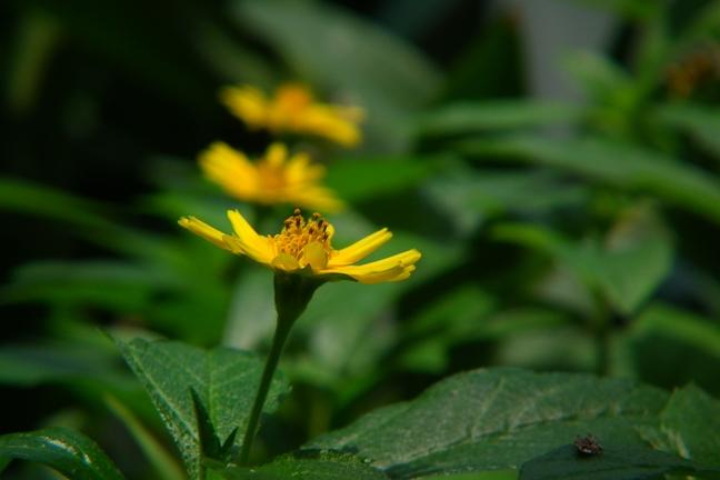 夏の植物園 2 クローズアップ_b0214473_8393729.jpg