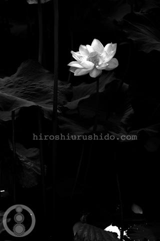 白黒でも_c0229485_110068.jpg